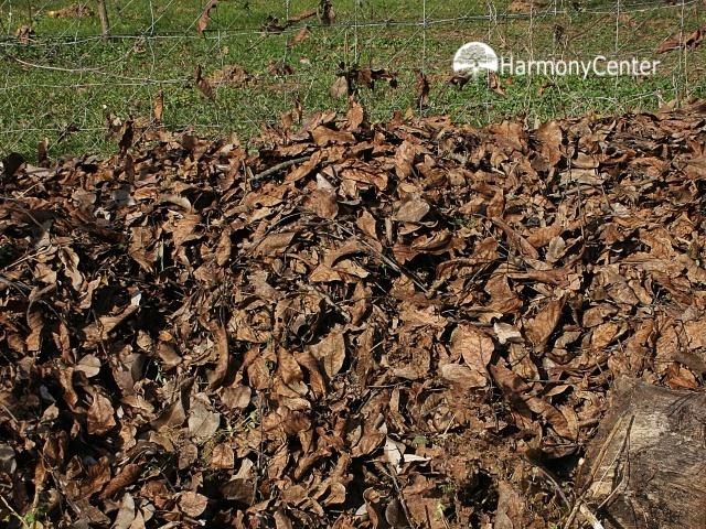 bladcompost